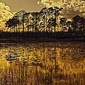 Sunset Jd by Bruce Bain