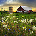 Sunset Lace Pastures by Debra and Dave Vanderlaan