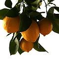 Sunset Lemons by Marna Edwards Flavell