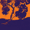 Sunset Madrone by Cecily Mitchell