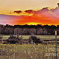 Sunset Meadow by Marilyn Smith