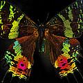 Sunset Moth by Bill Owen