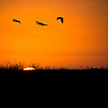 Sunset Of The Ibis by Mark Andrew Thomas