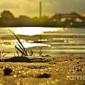 Sunset On A Sandy Beach by PatriZio M Busnel