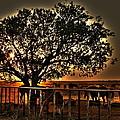 Sunset On A Texas Drought by Gary Emilio Cavalieri
