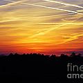 Sunset On Fire by Francie Davis