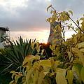 Sunset On Leaves by Abhishek Tiwary