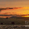 Sunset On Open Range by Robert Bales