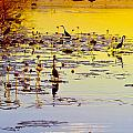 Sunset On Parry's Lagoon by Penney Hayley