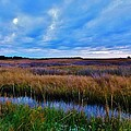 Sunset On The Marsh by Holly Dwyer