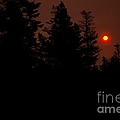 Sunset On The Pines by Natural Focal Point Photography