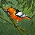 Sunset Orange by Sherry Cullison