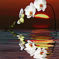 Sunset Orchids by Angela Stanton