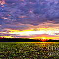 Sunset Over Farmland by Olivier Le Queinec