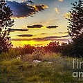 Sunset Over Field Of  Flowers by Peggy Franz
