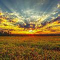 Sunset Over Field by Robert Mullen