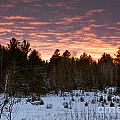 Sunset Over The Winter Forest by Cheryl Baxter