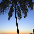 Sunset Palm by Raul Rodriguez