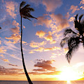 Sunset Palm Trees In Hawaii by Design Pics Vibe