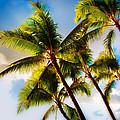Sunset Palm Trees by Joe Carini