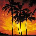 Sunset Palms by Richard Cheski
