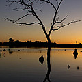 Sunset Riverlands West Alton Mo Portrait Dsc06670 by Greg Kluempers