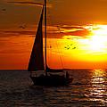 Sunset Sail Venice Florida by Anne Kitzman