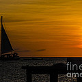 Sunset Sails by Judy Wolinsky