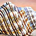 Sunset Seashell by Ben Yassa