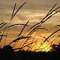 Sunset Sentinels by Carolyn Jacob