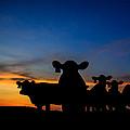 Sunset Serenade by Kelli Brown