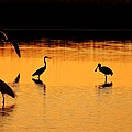 Sunset Silhouette by Al Powell Photography USA