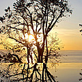 Sunset Silhouette And Reflections by Kaye Menner