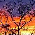 Sunset With Tree Silhouette by Tamara Lee Madden