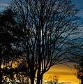 Sunset Silhouette by Venetta Archer