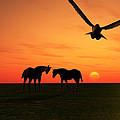Sunset Silhouettes Four by Mark Connor