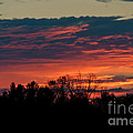 Sunset Sky by Cheryl Baxter
