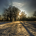 Sunset Snow Trees by Nathan Wright