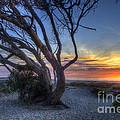 Sunset Swing by Mathias
