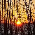 Sunset Through Grasses by Barbie Corbett-Newmin