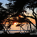 Sunset Through The Cypress Trees Cambria by Ian Donley