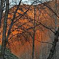 Sunset Through The Forest by Guido Montanes Castillo
