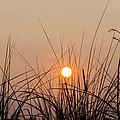 Sunset Through The Grass - Villas New Jersey by Bill Cannon