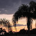 Sunset Through The Palms by Zina Stromberg