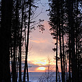 Sunset Through The Pines by David T Wilkinson
