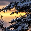 Sunset Through The Snowy Branches by Cheryl Baxter