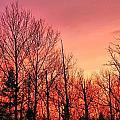 Sunset Through Trees by Gene Cyr