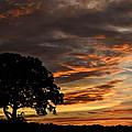 Sunset Tree by Aaron Greuel