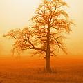 Sunset Tree by Jonny Rushton