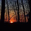 Sunset Trees by Mark Hudon